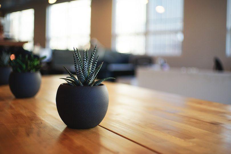 Planten In Badkamer En Slaapkamer: Makkelijke kamerplanten ries ...