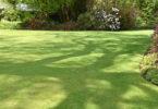 nieuwe grasmat in tuin
